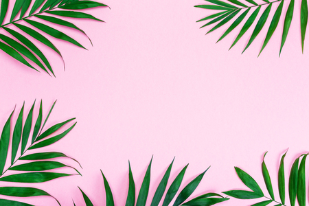 Green palm leaves on color paper, tropical composition background with copy space, mock up