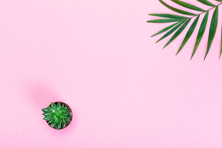 Succulent plant decorated palm leaves on pastel pink paper, tropical background, flat lay