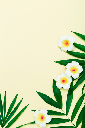 Green palm leaves on creative pastel colorful paper decorated plumeria flowers, tropical composition background with copy space, mock up Stock Photo