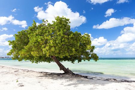 Big tropical single tree with green foliage on sandy beach close to Caribbean sea, beautiful travel destination card Фото со стока