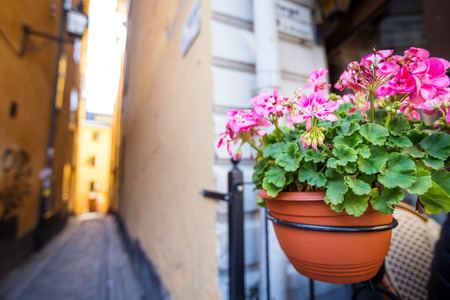 Streets decorated with flowers in pot in Tallinn, old town. Nobody Stock Photo
