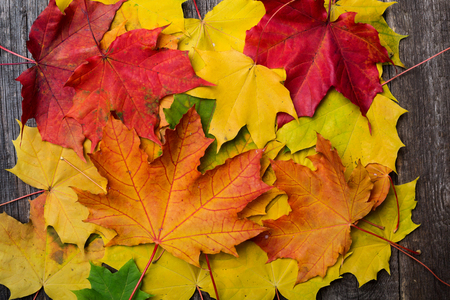 Maple leaves background. Autumn concept