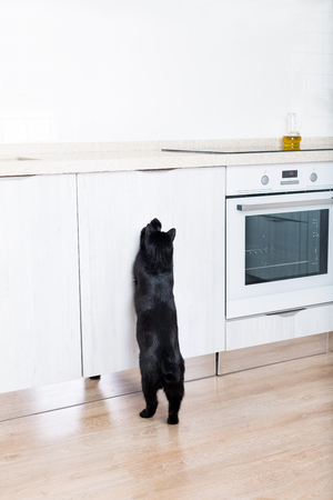 Black cat on clean countertop at white kitchen interior, pet sitting on table, no people. Medicine parasite health concept