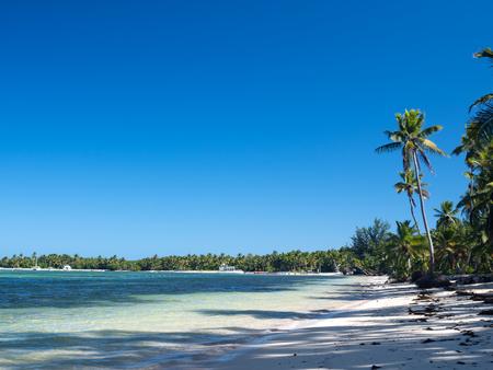 Tropical seashore with coconut palm trees. Caribbean getaways