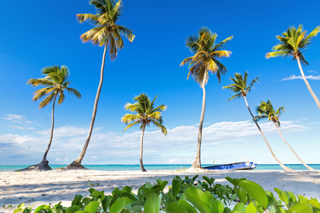 Coconut palm trees an pristine bounty beach close to sea. Travel, tourism, vacation concept tropical background 스톡 콘텐츠