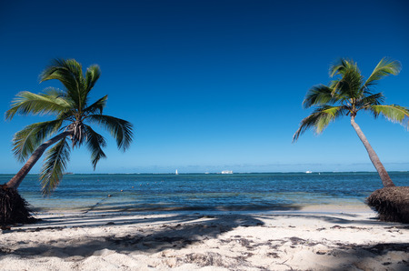 Two coconut palm trees on tropical beach. Caribbean destination Stock Photo