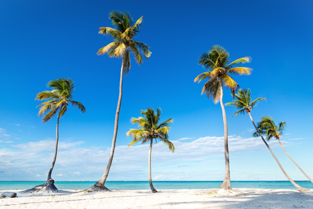 Coconut palm trees an pristine bounty beach close to sea. Travel, tourism, vacation concept tropical background 写真素材