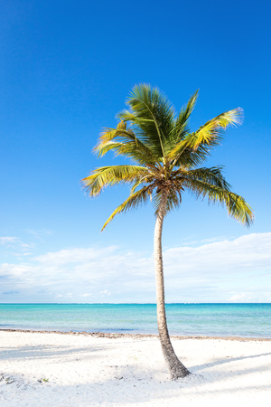 Young single coconut palm tree at bounty beach close to sea. Travel, tourism, vacation concept tropical background Banco de Imagens