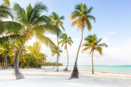 Coconut palm trees an pristine bounty beach close to sea. Travel, tourism, vacation concept tropical background Imagens