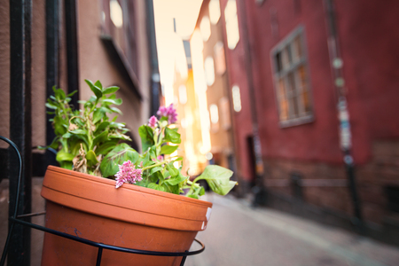 Streets decorated with flowers in pot in Tallinn, old town. Nobody Banco de Imagens