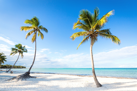 Coconut palm trees an pristine bounty beach close to sea. Travel, tourism, vacation concept tropical background Reklamní fotografie