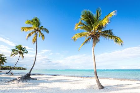 Palme da cocco una spiaggia incontaminata vicino al mare. Viaggi, turismo, concetto di vacanza sfondo tropicale Archivio Fotografico