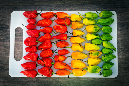 Hot peppers layered in row from red to green with a gradient, creative color of colorful mix food background, nobody
