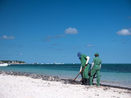 Bavaro, Punta Cana, Dominican Republic - 19 December 2018: Workers cleaning sargassum algae on tropical shore. Caribbean ecology problem