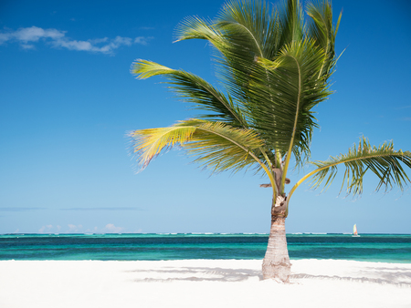 One coconut palm tree on tropical sandy shore. Caribbean destinations 免版税图像