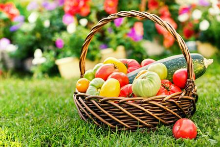 Verduras en canasta en el jardín, al aire libre. Cosecha de verano Foto de archivo