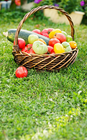 Vegetables in basket at the garden, outdoor. Summer harvest