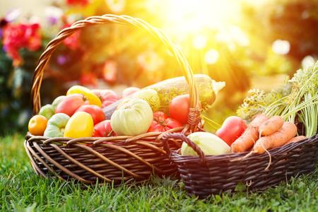Warzywa w koszu w ogrodzie, na zewnątrz. Letnie żniwa
