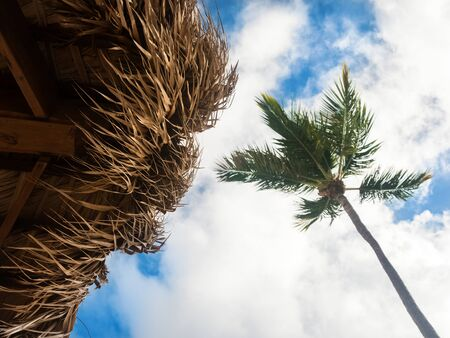 Sunshade umbrella and palm tree on blue sky and clouds background, top view