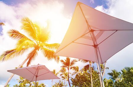 Sunshade umbrellas and coconut palm trees on blue sky and clouds background, top view