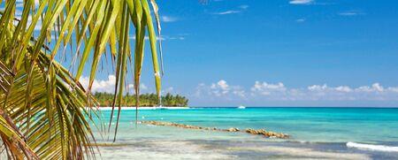 Coconut Palm tree leafs on caribbean sea beach, Dominican Republic. Saona island