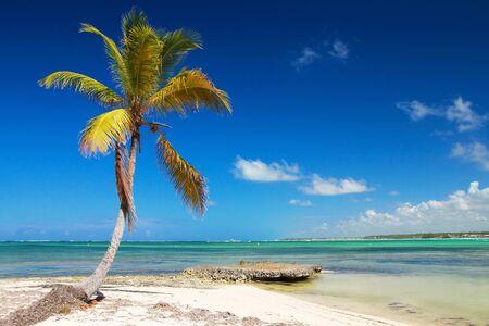 Beautiful coconut palm tree on caribbean beach. Travel destinations. Summer vacations