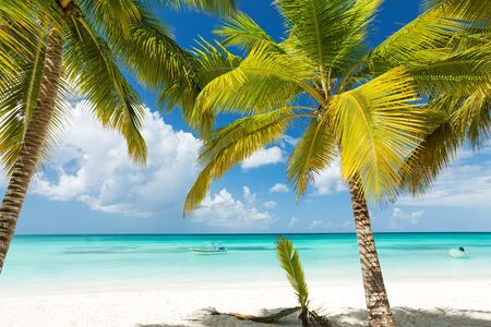 Coconut palm trees on caribbean island with sea view. Vacation holidays summer background