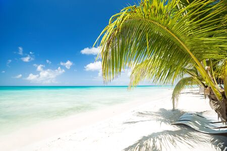 Beach calm scene with sunbeds under coconut palms close to Caribbean sea. Tropical paradise with chaise lounges on white sand, beautiful travel card background 写真素材