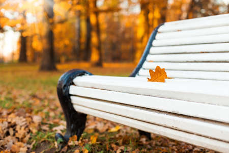 White wooden bench in autumn park, nobody. Seasonal fall nature concept card 免版税图像 - 151142371