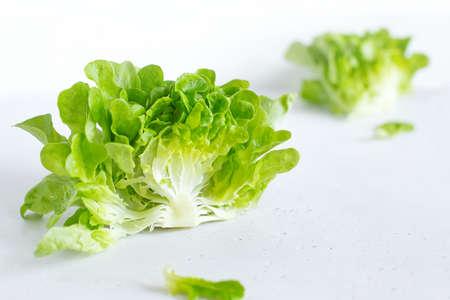 Half slice of green lettuce leaves on white background. Fresh butter head salad closeup. Selective focus Reklamní fotografie