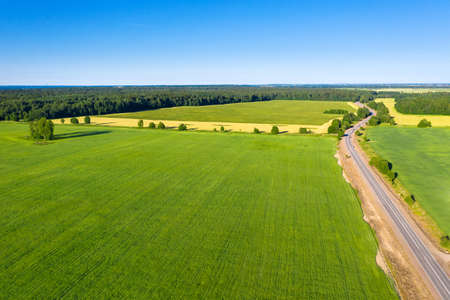 Asphalt road near summer forest and field with trees. Wild nature. Aerial view from drone