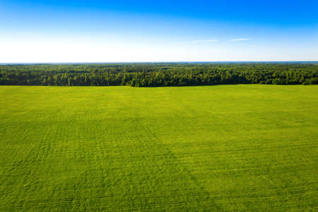Summer forest and field with trees. Wild nature. Aerial view from drone Reklamní fotografie - 153664308