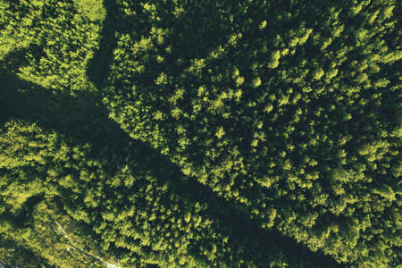Summer forest top view. Wild nature. Aerial view from drone Reklamní fotografie - 153700550