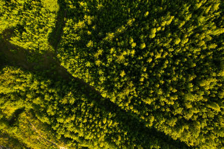 Green summer forest. Wild nature. Aerial view from drone Reklamní fotografie - 153664344