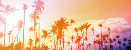 Dominican palm trees at sunset. Travel destinations Punta Cana, caribbean vacations long banner, toned image