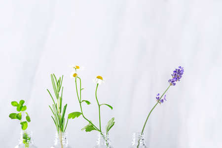 Transparent bottles with fresh herbs for aromatherapy. Aromatic sprigs of lavender, rosemary and rose for essential oils in jars on white background