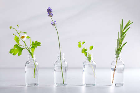 Transparent bottles with different herbs for aromatherapy. Aromatic sprigs of lavender, rosemary, chamomile and marjoram for essential oils in jars on white background