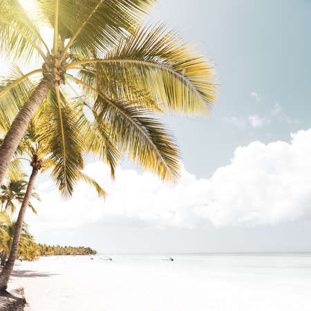 Coconut palm trees on white sandy beach on caribbean island. Vacation holidays summer background, toned image