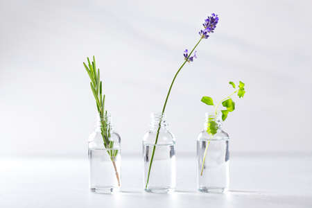 Transparent bottles with fresh herbs for aromatherapy. Aromatic sprigs of lavender, rosemary and marjoram for essential oils in jars on white background