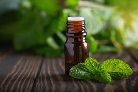 Blank amber bottle with essential oil Peppermint with fresh mint leaves, herbal aroma in in dark glass jar. Aromatherapy concept