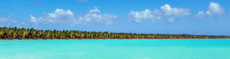 Panorama of coconut palm trees on caribbean island. Tourism and vacation long banner.