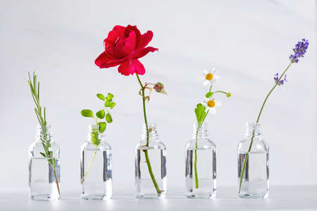 Transparent bottles with herbs for aromatherapy. Aromatic sprigs of lavender, rosemary, chamomile, marjoram and rose for essential oils in jars.