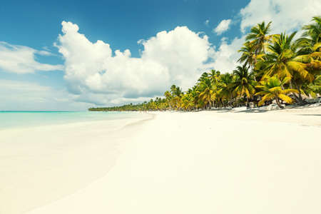 Coconut palm trees on white sandy beach on caribbean island. Vacation holidays summer background 스톡 콘텐츠