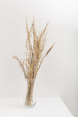 Pampas grass branch in vase on light gray wall background. Home natural decor concept.