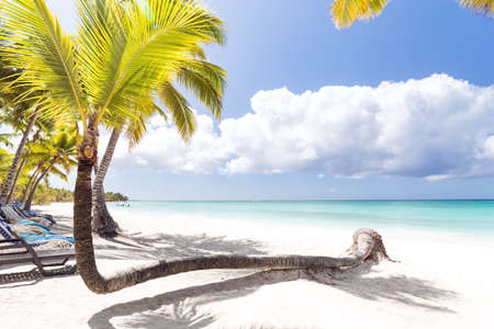 Beach calm scene under coconut palms close to Caribbean sea. Tropical paradise with white sand, beautiful travel card background Stock Photo