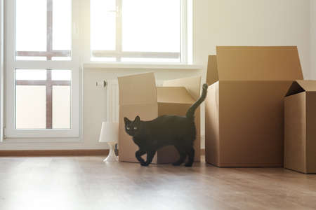 Black cat in empty room with cardboard boxes for moving, cozy home and relocation concept.