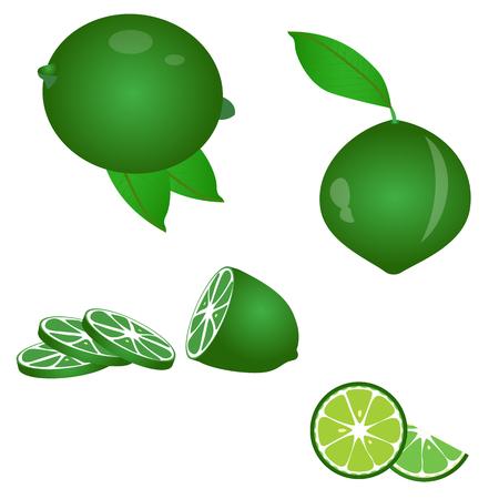 sweet segments: Limes set of illustrations