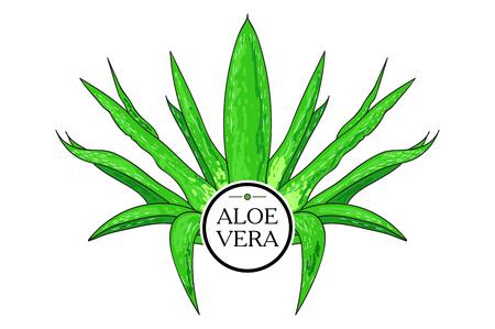 treatment plant: aloe Vera. healing plant.