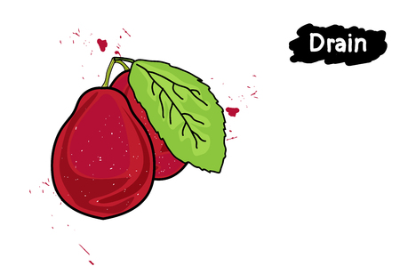 Two ripe red plum with leaves.the drawing hands. Illustration