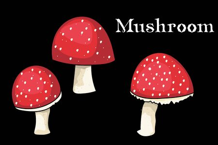 Toadstool. Edible mushrooms. vector illustration. black background